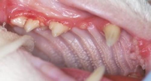 gum red line